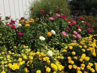 outside flowers