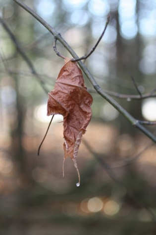impaled leaf