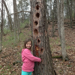 woodpecker holes