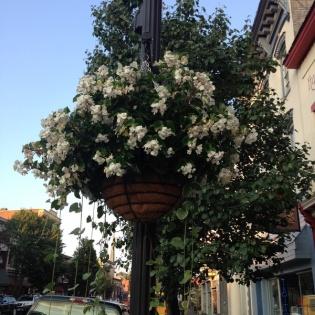 pole flowers