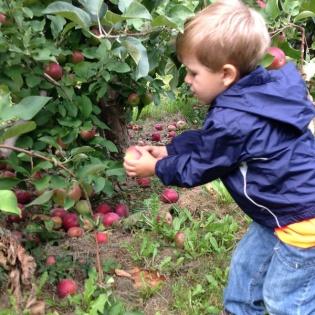 Andrew picks an apple