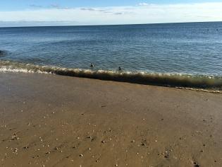 """""""Beach"""