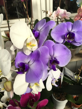"""Orchids/"