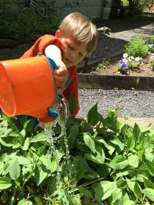 Andrew watering