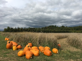 Pumpkin picking too