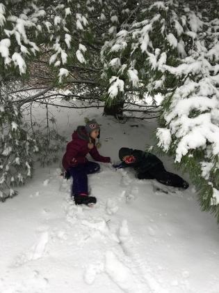 Tree snow cave
